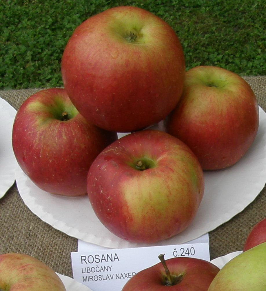 1. místo odrůda Rosana