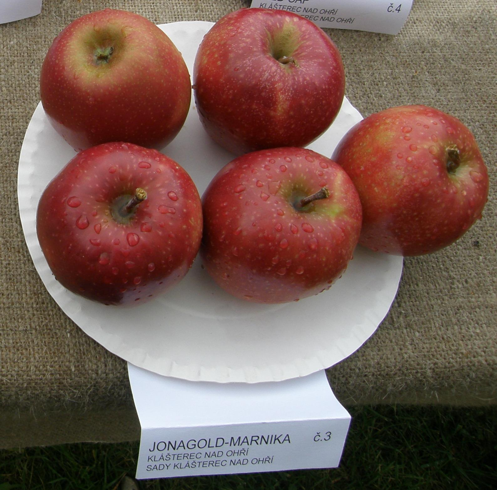 3. místo odrůda Jonagold - Marnika